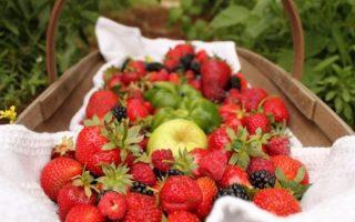 Šta je organska hrana u BiH? Koja je razlika između domaćeg i organskog?
