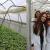 Pogledajte kako izgleda praksa u Poljoprivredno - prehrambenoj školi Prijedor