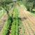 Mladi farmeri – 4. mjesto Aldin Hodžić: Moja priča